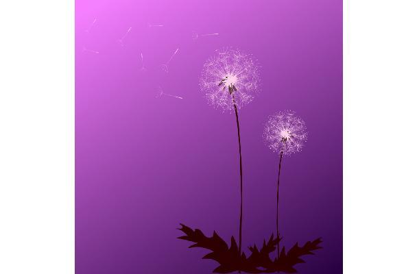 Stiletto Wheels Purple Flowers