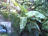 Access My Home: Back Garden